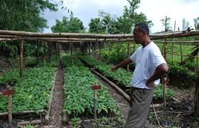 Madagaskar SAVA 2009 (Nosiarina) fem 018