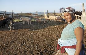 Suedafrika%20KHANYISA%202009%20(Hankey)%20frp%20022_urn