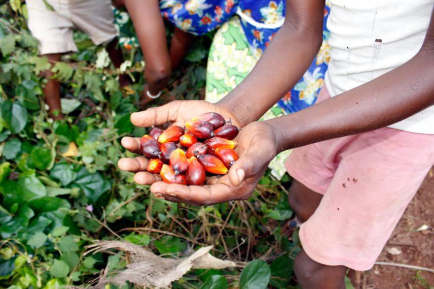 """""""JESUS KPEGO DONA"""" - eine informelle Frauengruppe, welche auf traditionelle Art Palmöl herstellt. Sie stellen zwei Öle aus den Trauben von Ölpalmen her, das aus dem Fruchtfleisch """"rote"""" Palmöl, aus den Kernen das """"schwarze"""" Palmkernöl, das auch als Antibiotika wirkt."""